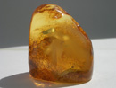 Baltic amber gem stone - natrual gem stone - polished Baltic amber gem - buy - order - purchase